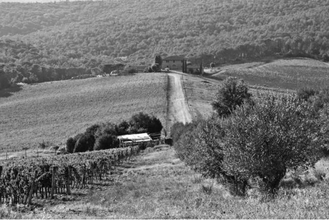 Akimirka po šimtamečiais alyvmedžiais, Federico Baglini nuotr.